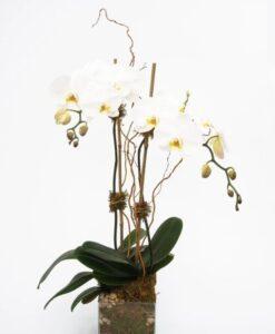 Ομορφα λουλουδια για δωρο, Αποστολη λουλουδιων αθηνα