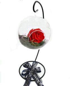 τριαντάφυλλα για πάντα, Τριαντάφυλλα Που Διαρκούν, Τριαντάφυλλα Που Διαρκούν 3 Χρόνια