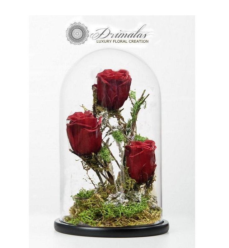 Τριαντάφυλλα που ζουν.. για πάντα