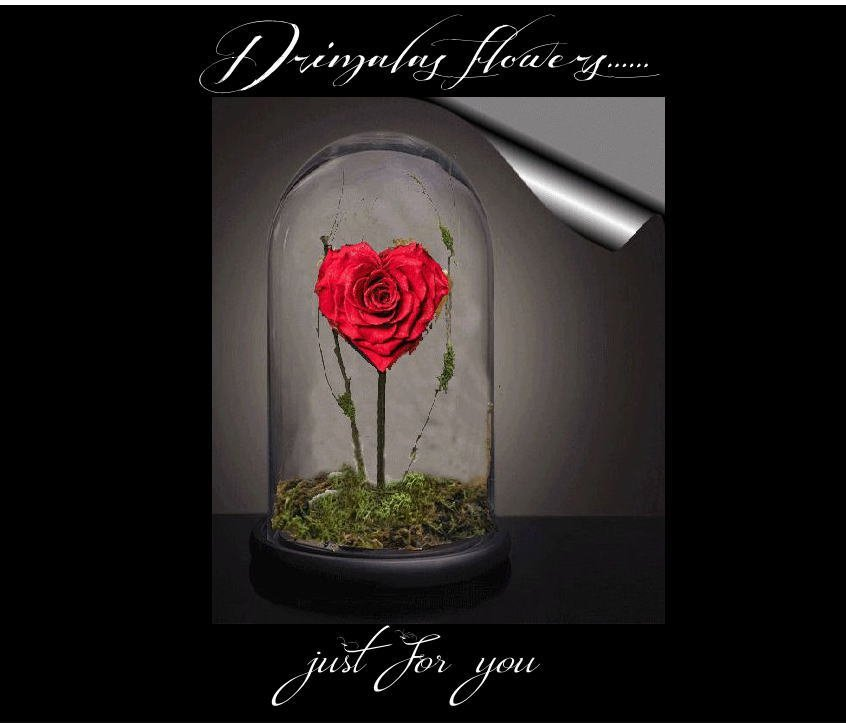 Tριανταφυλλα για παντα,αιώνια τριαντάφυλλα,forever roses , eternity roses , forever roses αθηνα