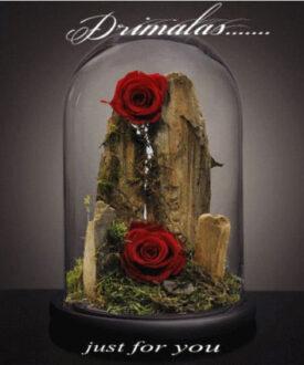 τριανταφυλλα που ζουν για παντα αθήνα,,eternity roses, for ever roses